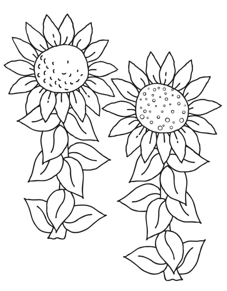 49 Gambar Sketsa Bunga Matahari Mawar Tulip Sederhana